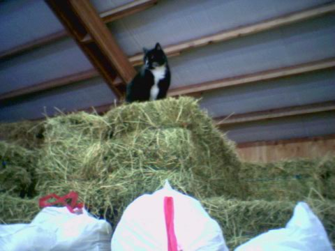 Barncat2
