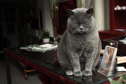Amstelcat