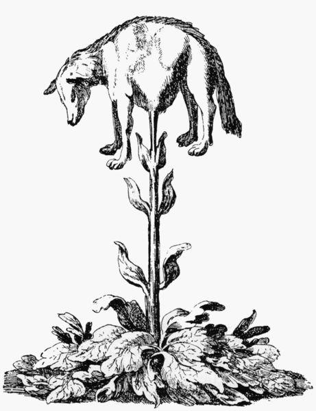 Vegetablelamb